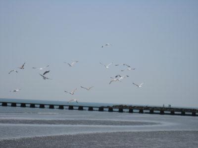 Vögel am Meer
